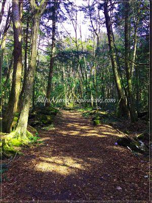 東海自然歩道には、遊歩道でも迷いやすい小道が多い。