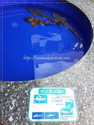 手で触れることができるサメ肌体験コーナー