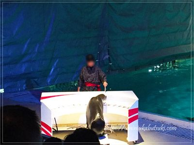 ピアノを演奏する油壷マリンパークのアシカ