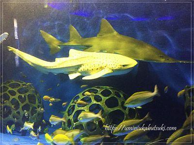 水族館「魚の国」の2階にある回遊水槽