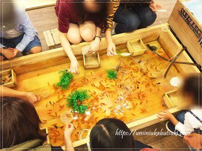 浅草きんぎょの金魚たち