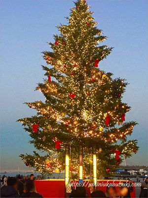 日没前の、来場客がまだ少ない赤レンガ倉庫のクリスマスツリー
