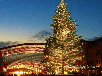 刻一刻と表情を変えていく日没頃のクリスマスツリー