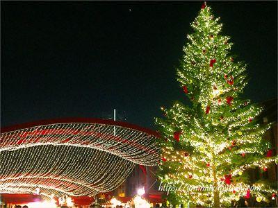 高さ12mある、赤レンガ倉庫クリスマスマーケットのもみの木ツリー