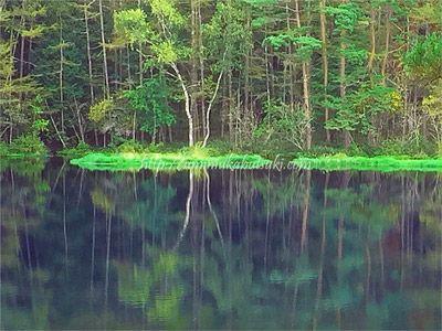 透明度が高く美しい湖面が広がる、絶景スポットの御射鹿池