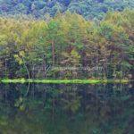 関東近郊の自然を走るドライブなら御射鹿池!観光時間や駐車場をまとめてみた