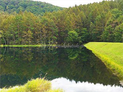 関東近郊で自然豊かなドライブスポットをして人気の御射鹿池
