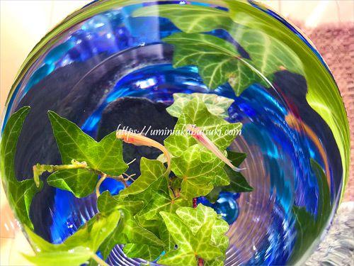 ガラスの器の中を優雅に泳ぐメダカ